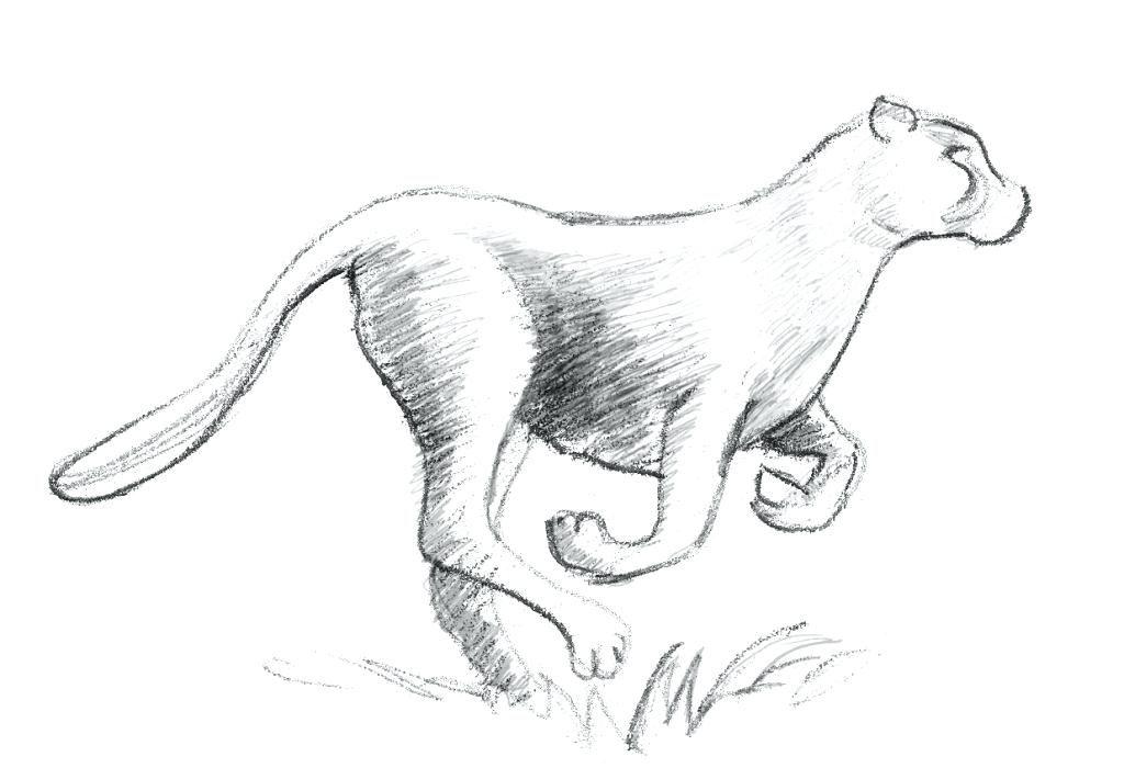 dibujo lápiz animal fácil