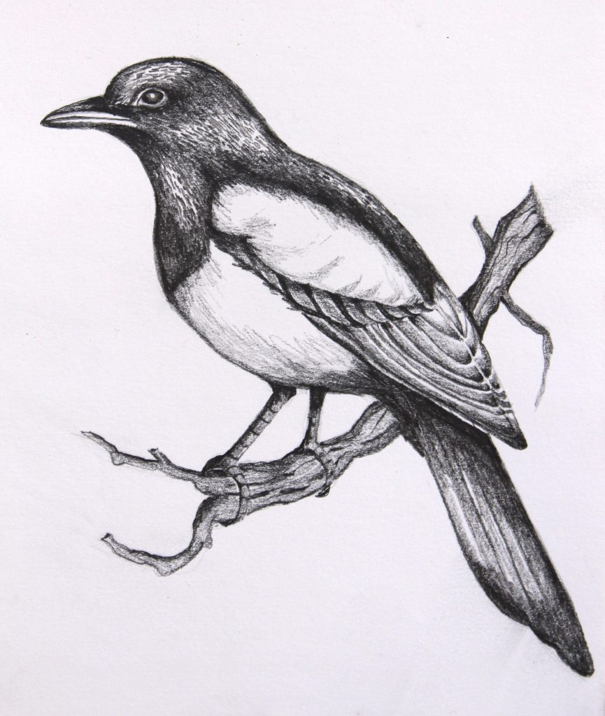 dibujo lápiz ave