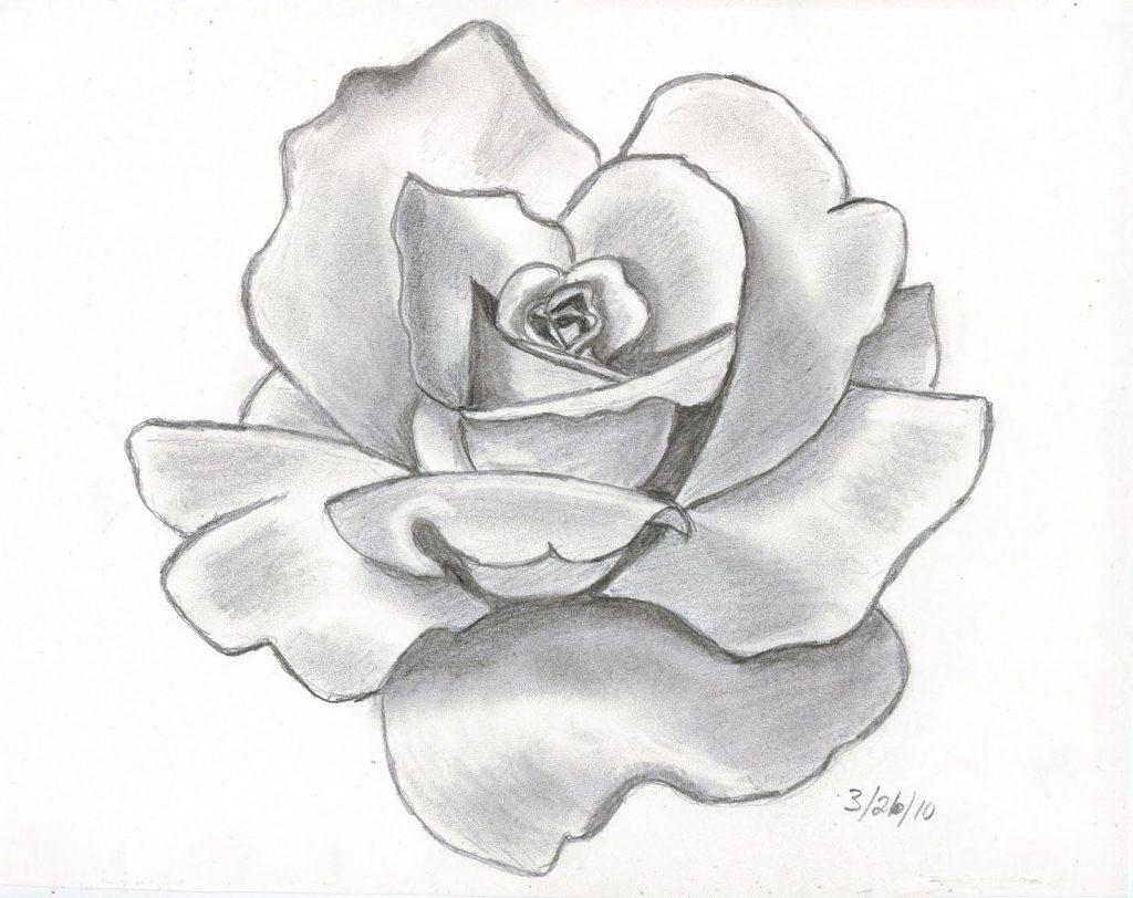 dibujo a lapiz de una flor