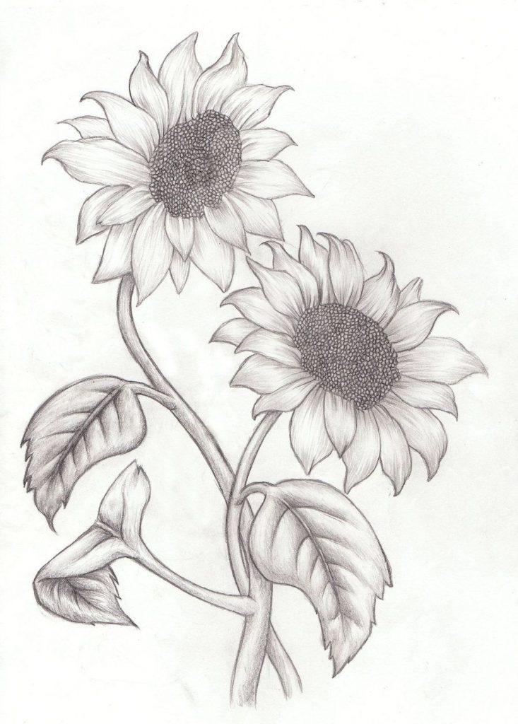 dibujo lapiz girasoles